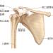 肩関節について